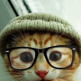 I Am Hipster, Hear Me Purr