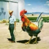 Punky Rooster