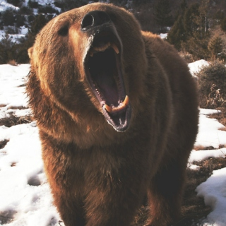 crushes are pretty grizzly anyways