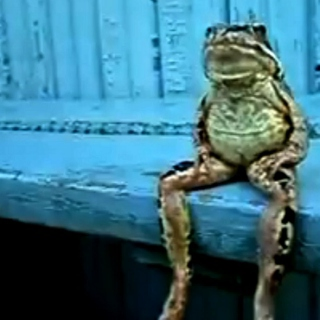 How Do You Know When A Frog Is Crying?