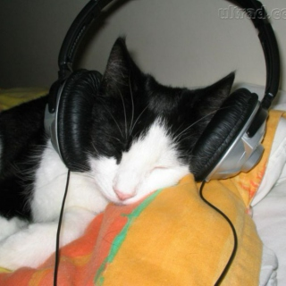 To listen with your cat