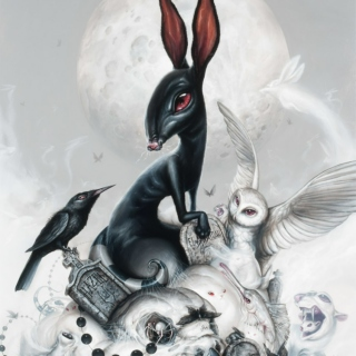 Follow the black rabbit