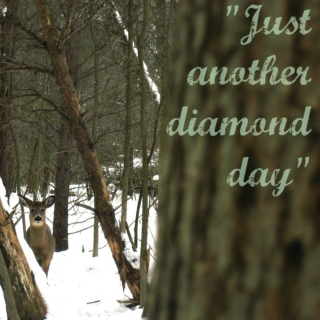 Just another diamond day