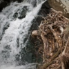 Roots Waterfall Trip
