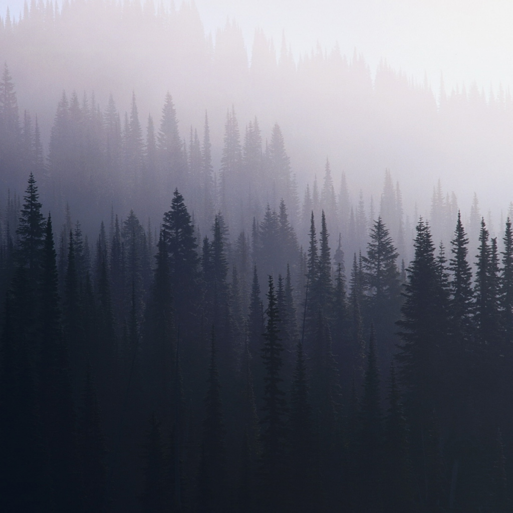 Indie Forest Tumblr | Wallpapers Background