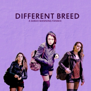 different breed | a sarah manning fanmix