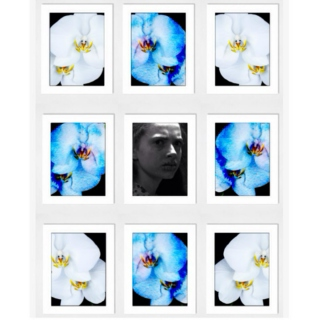 You Took a White Orchid (And Turned It Blue)
