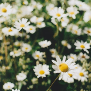here the daisies guard you from every harm.