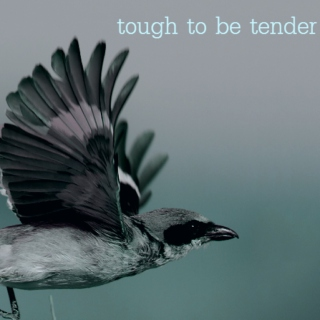 tough to be tender
