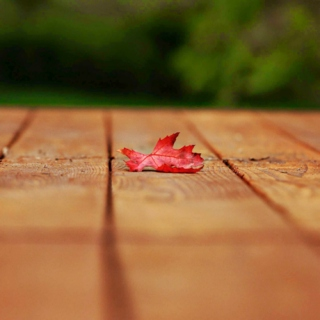 Red leaf and sweet weather