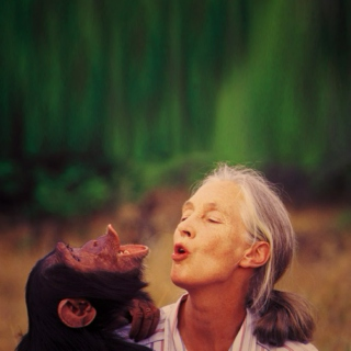 Dr. Goodall, I suppose
