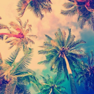 We're Going Somewhere Tropical