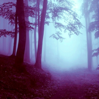 The Forest, She Beckons Me