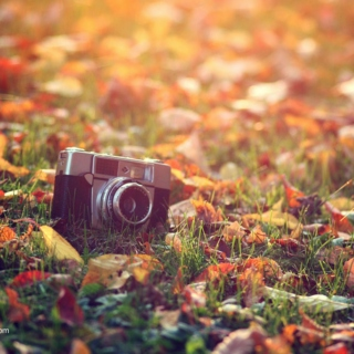 Snap Shots of Autumn
