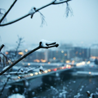 Leaves and snow fall, and I, for you.