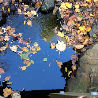 perfect autumn playlist