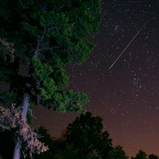 pine tree, shooting star