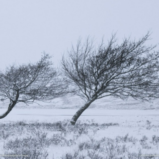 The Winter Winds