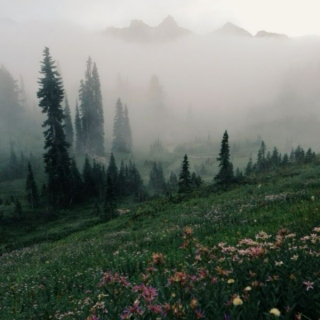 Headed For The Misty Mountains