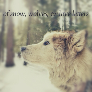 of snow, wolves & love letters
