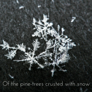 Of the pine-trees crusted with snow