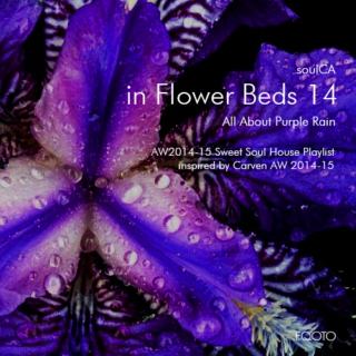 AW 2014-15 #58 in Flower Beds 14 - All About Purple Rain
