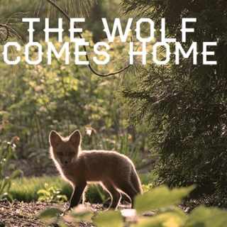 the wolf comes home