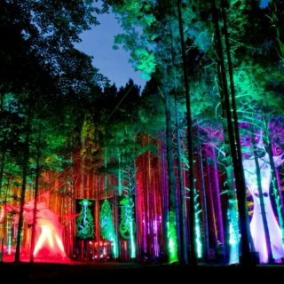 ELECTRIC FOREST '15