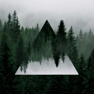 lost in the evergreen