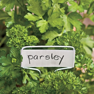 Tunes for Parsley