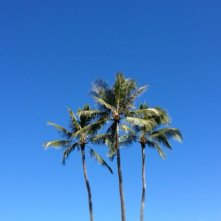 blue skies and palm trees