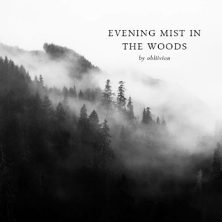 evening mist in the woods