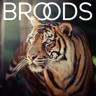 "If you like ""Broods"" then you'll like this:"