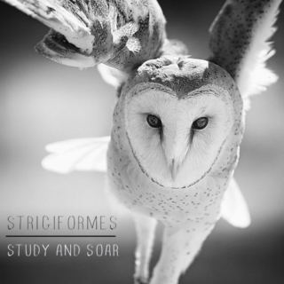 Strigiformes ~ Study and Soar