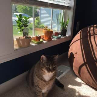 Fresh Plants and Free Kittens