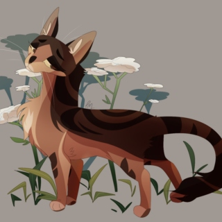 black sheep // a leafpool mix