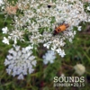 Sounds: Summer 2015