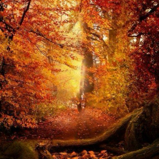 In the autumn woods