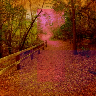 Autumn Running Playlist