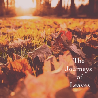 The Journeys of Leaves