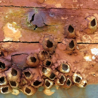 Brass Barnacles 10.14.15
