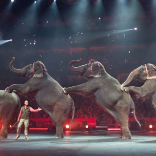 Farewell to the Circus Elephants