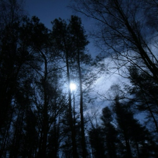 Fullmoon Forest
