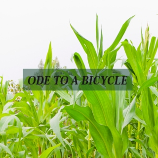 ode to a bicycle