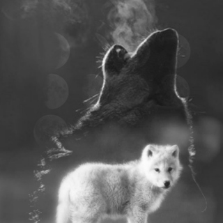 ☽☽ THE WOLF YOU FEED ☾☾