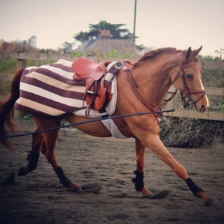 Lunging horses