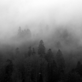 dark and foggy forest