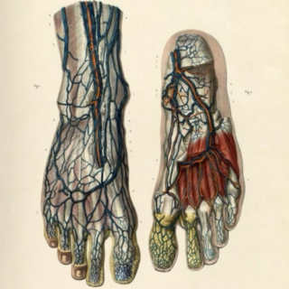 Dorsal foot vein - The study playlist