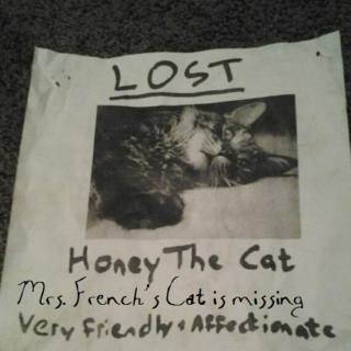 Mrs. French's Cat is Missing