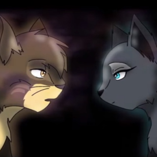 warrior cats fandom days